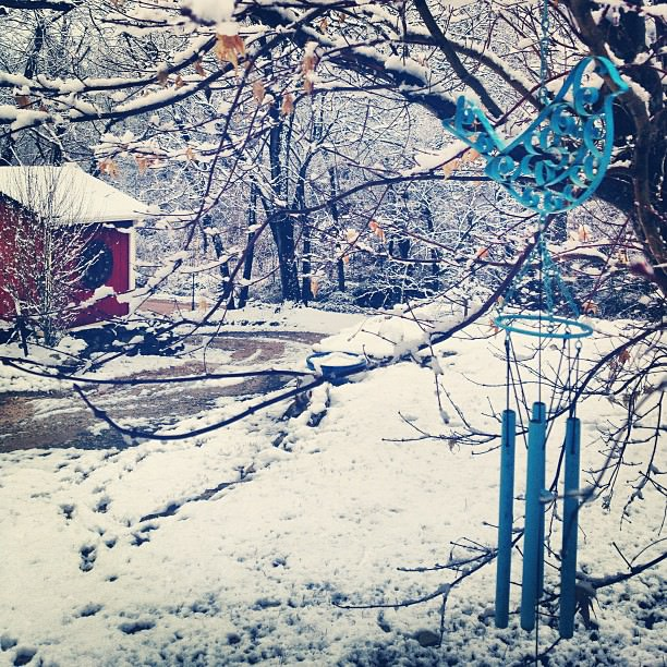 Snow bird.