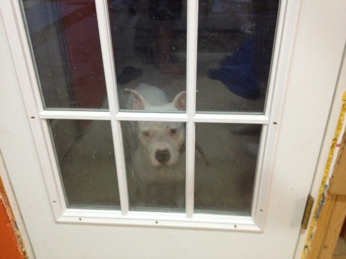 8:52 PM: Someone wants back inside from her potty break.
