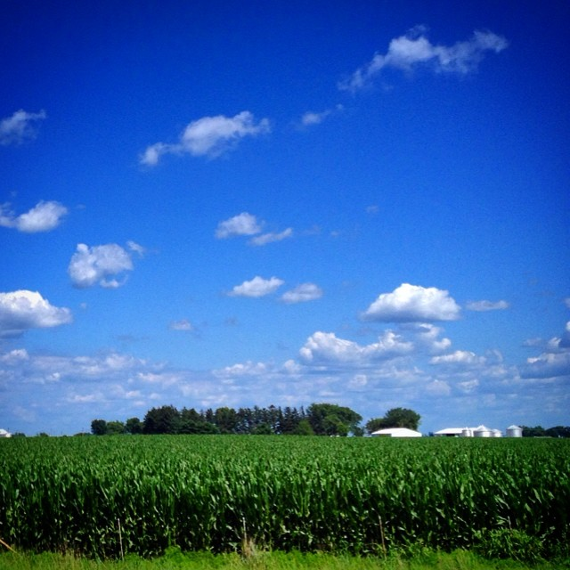 So, this is my take on Illinois thus far: a whole lot of maize.