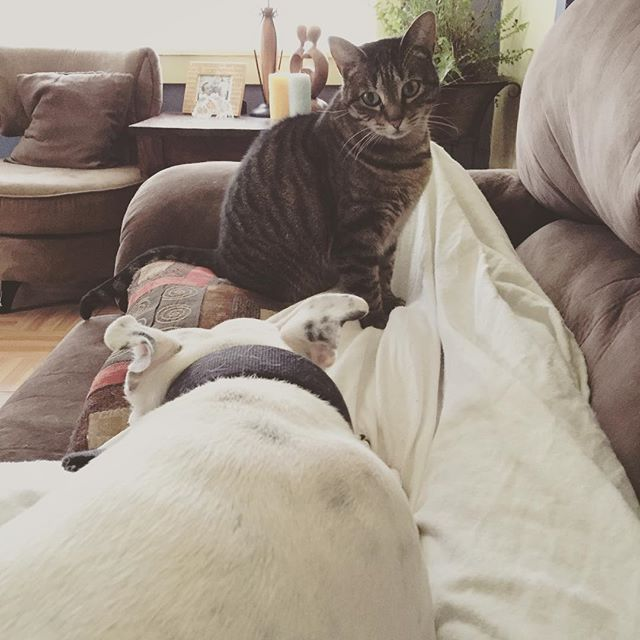 They won't let me get up from the couch.
