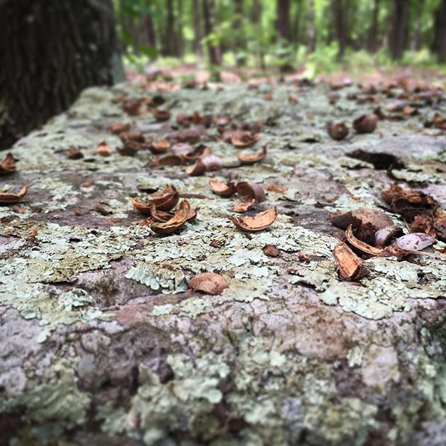 Someone busted a nut in the woods.