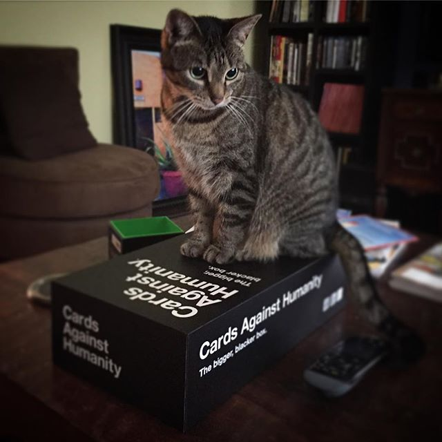 Cats Against Humanity. Actually, that seems appropriate. #fauna #cardsagainsthumanity