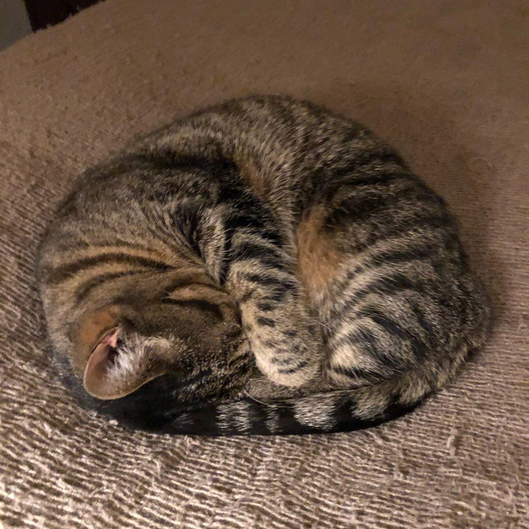 Catball