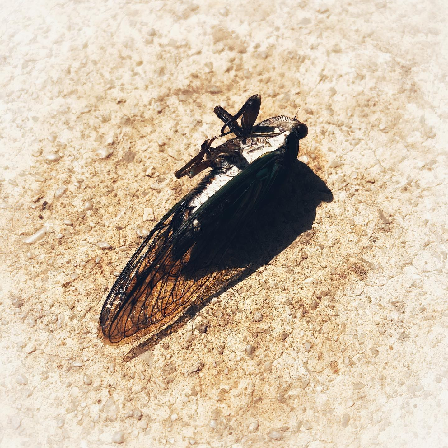 Dear aurally annoying cicadas,I noticed as of this morning you finally shut the hell up. Now I can hear the crickets and frogs, as opposed to what I can only imagine would be the sound of white noise in the waiting room of some 1-Star Howard Johnson in the Middle of Nowhere. Thank you for dying.Signed, Probably everyone.